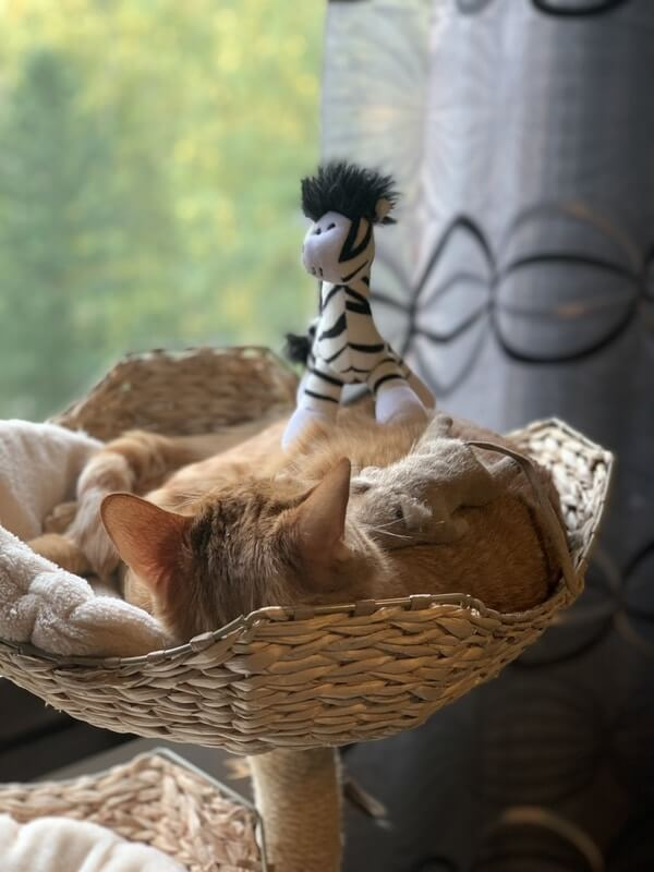 Kissa makaa puussa